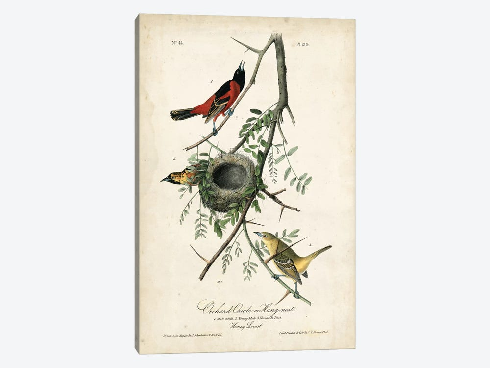 Orchard Orioles 1-piece Canvas Artwork