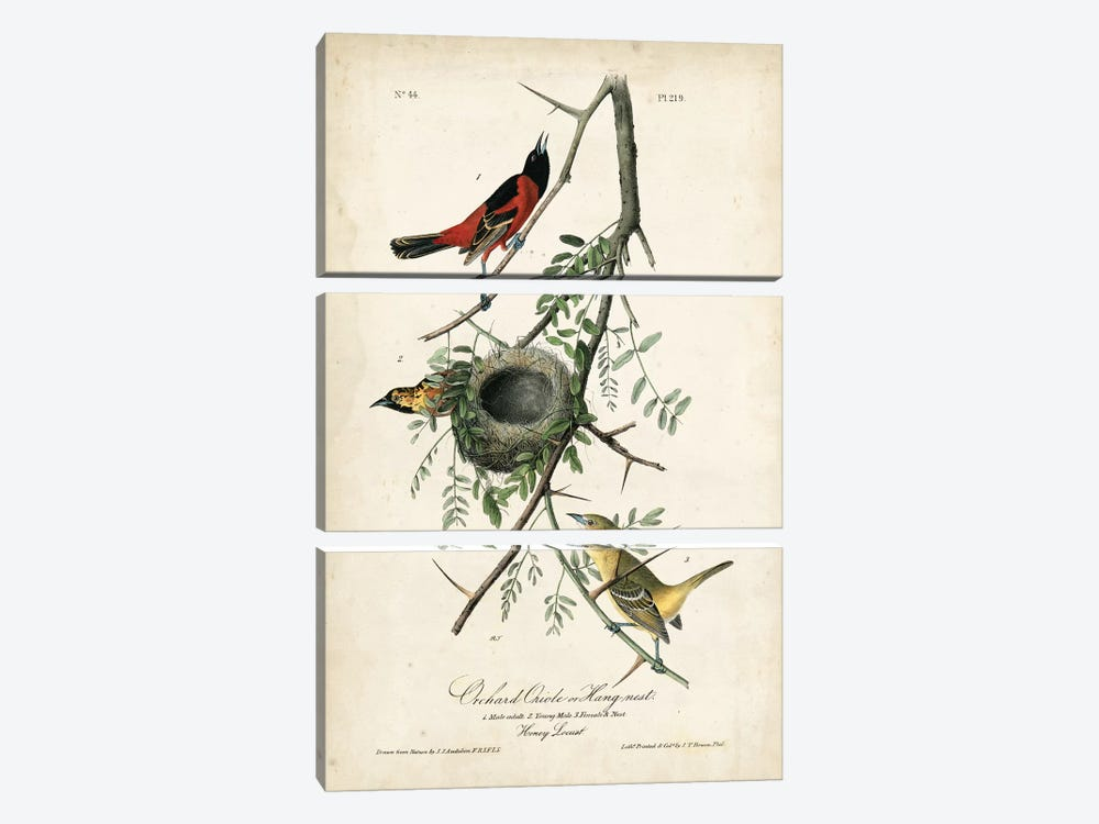 Orchard Orioles 3-piece Canvas Artwork