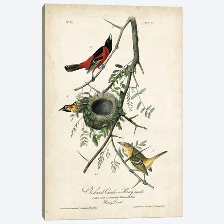 Orchard Orioles Canvas Print #WAG74} by John James Audubon Canvas Print