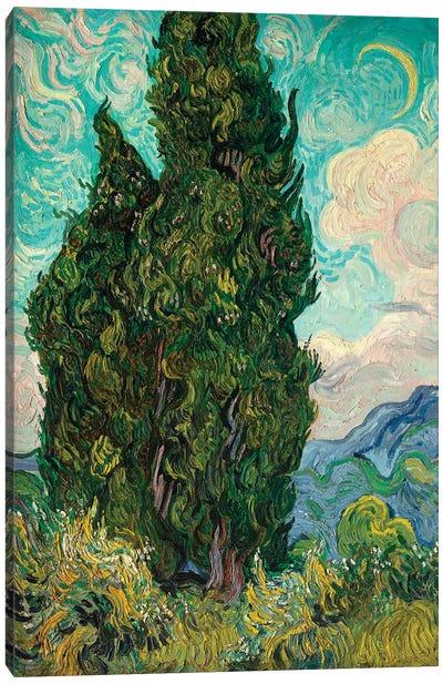 Cypresses I Canvas Art Print