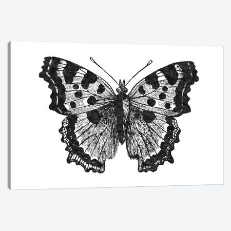 Butterfly I Black Canvas Print #WAO105} by Willow & Olive Canvas Art