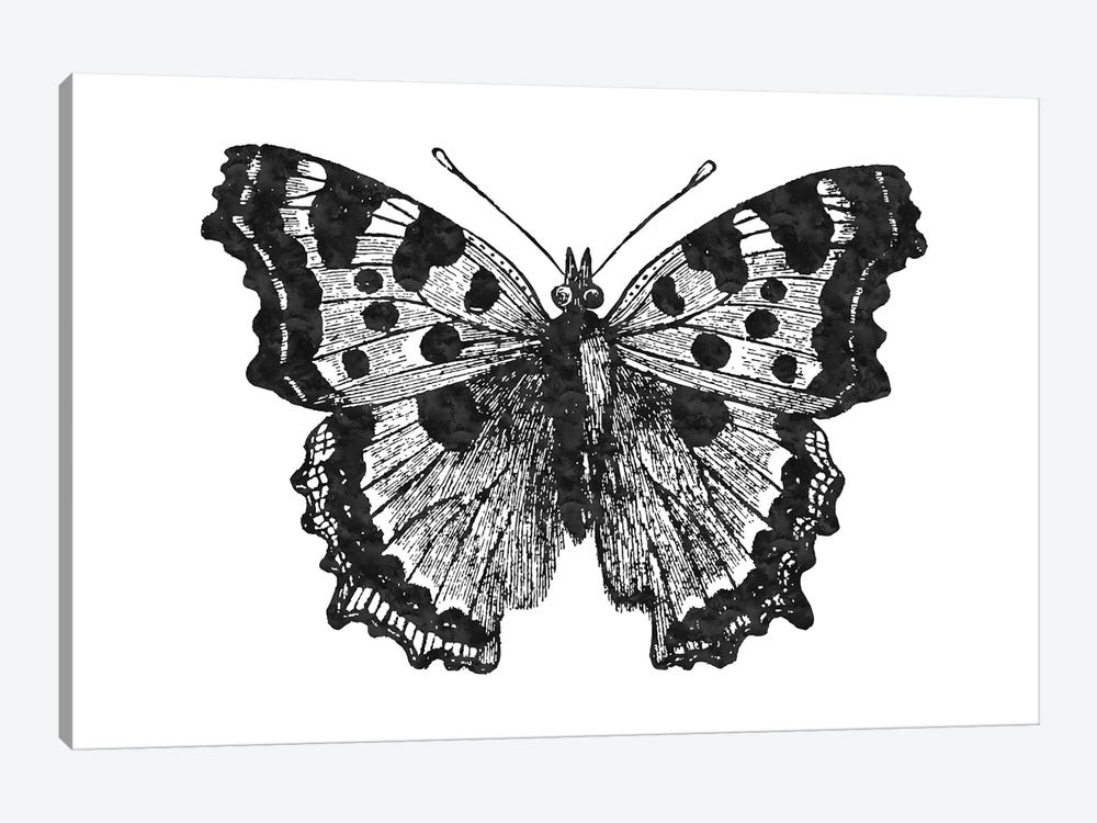 Butterfly I Black by Willow & Olive 1-piece Canvas Print