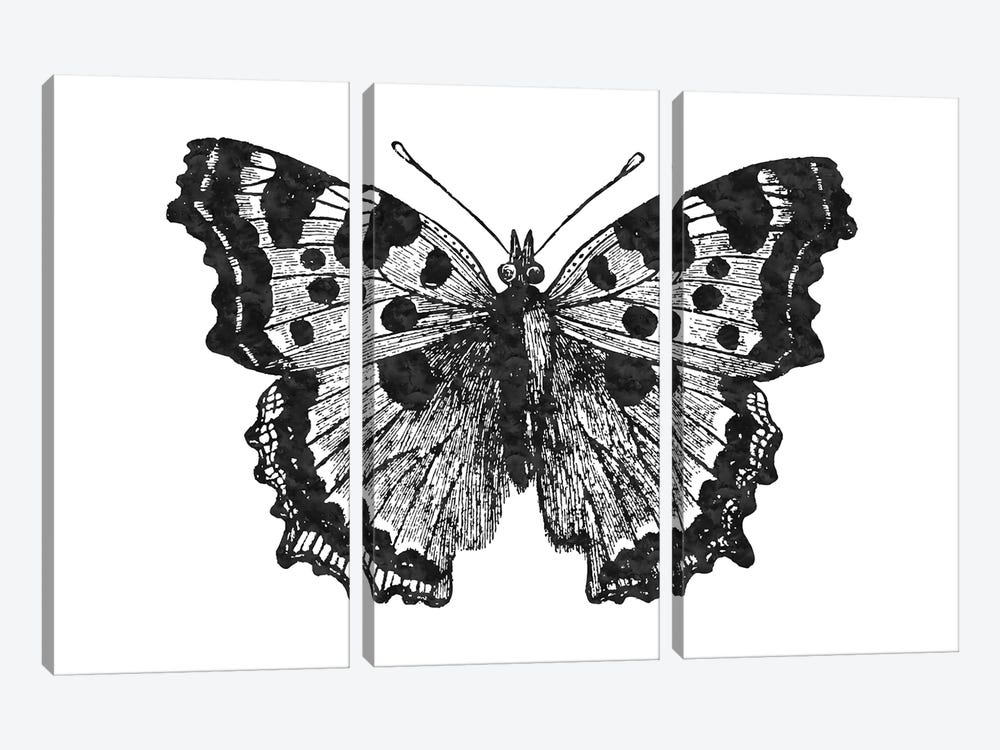 Butterfly I Black by Willow & Olive 3-piece Canvas Print