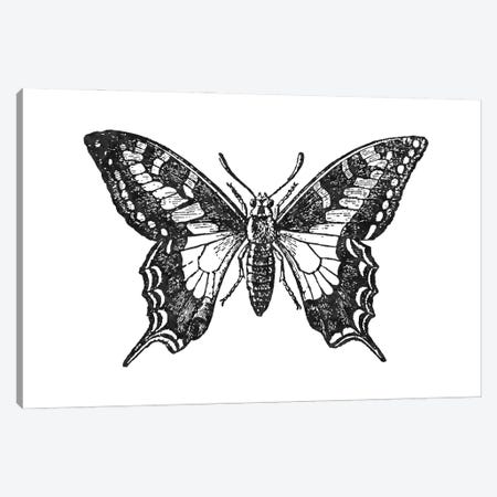 Butterfly II Black Canvas Print #WAO107} by Willow & Olive Canvas Art