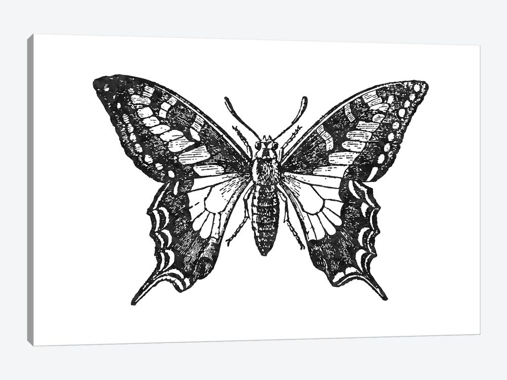 Butterfly II Black by Willow & Olive 1-piece Art Print