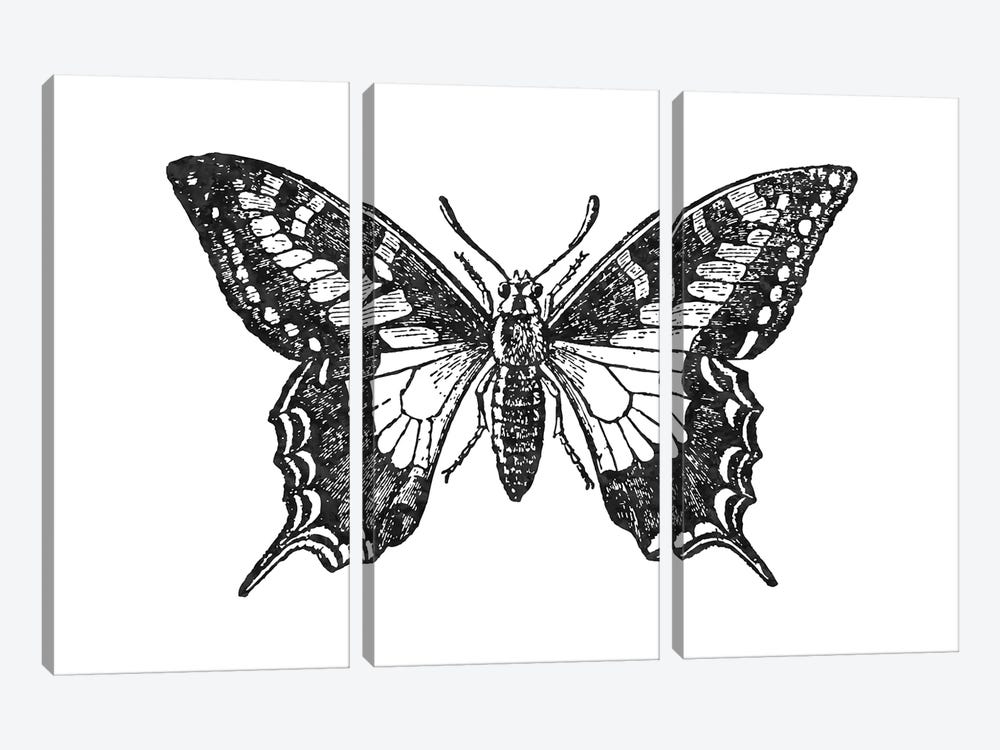 Butterfly II Black by Willow & Olive 3-piece Art Print