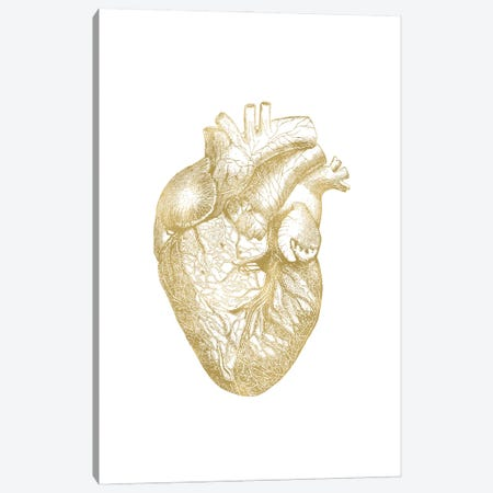 Heart Anatomical Gold Canvas Print #WAO116} by Willow & Olive Art Print