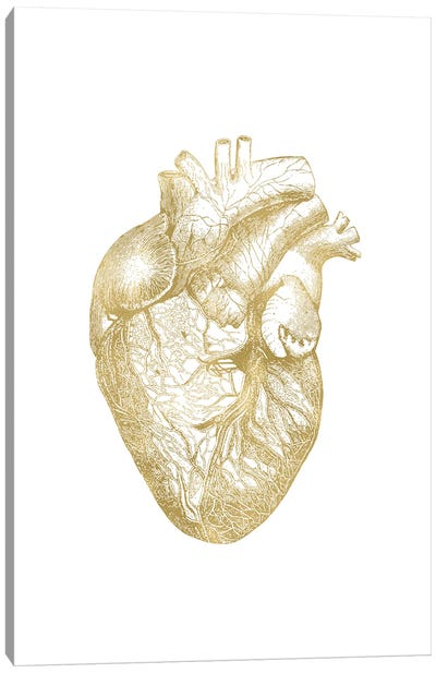 Heart Anatomical Gold Canvas Art Print