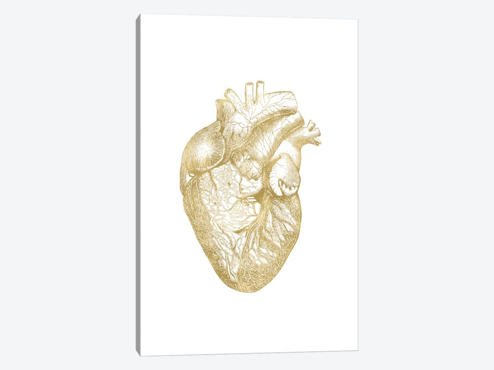 Heart Anatomical Gold by Willow & Olive 1-piece Canvas Art Print