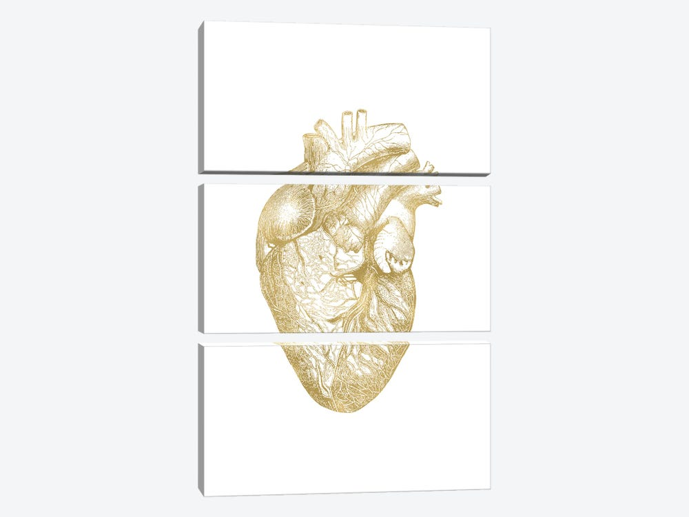 Heart Anatomical Gold by Willow & Olive 3-piece Canvas Art Print