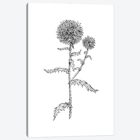 Thistle II Black Canvas Print #WAO131} by Willow & Olive Canvas Art