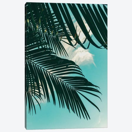 Tropical Palms Canvas Print #WAO133} by Willow & Olive Canvas Art