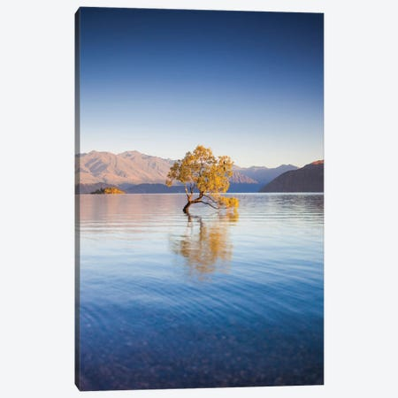 New Zealand, South Island, Otago, Wanaka, Lake Wanaka, solitary tree, dawn I Canvas Print #WBI105} by Walter Bibikow Canvas Artwork