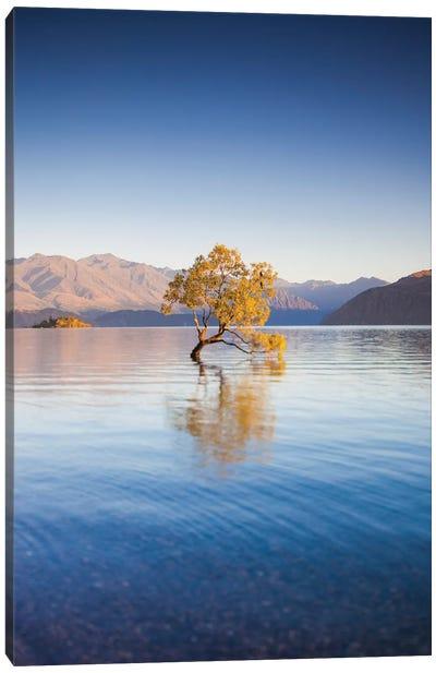 New Zealand, South Island, Otago, Wanaka, Lake Wanaka, solitary tree, dawn I Canvas Art Print