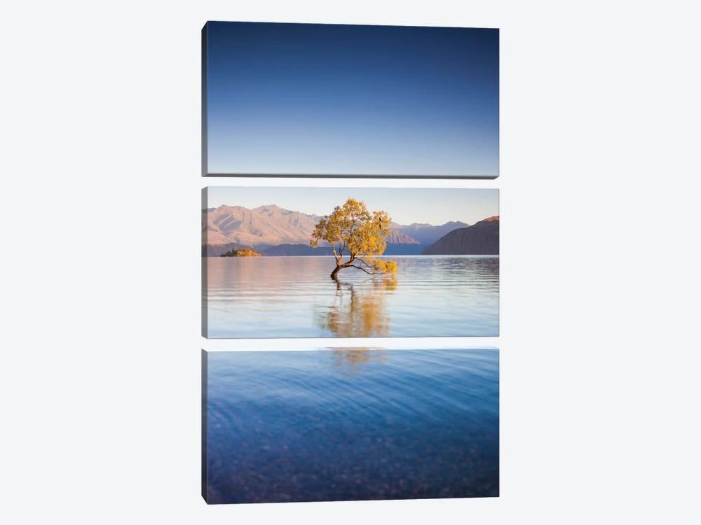 New Zealand, South Island, Otago, Wanaka, Lake Wanaka, solitary tree, dawn I by Walter Bibikow 3-piece Canvas Print