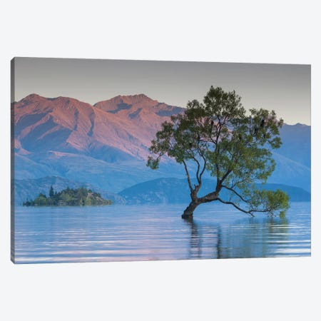 New Zealand, South Island, Otago, Wanaka, Lake Wanaka, solitary tree, dawn II Canvas Print #WBI106} by Walter Bibikow Canvas Wall Art