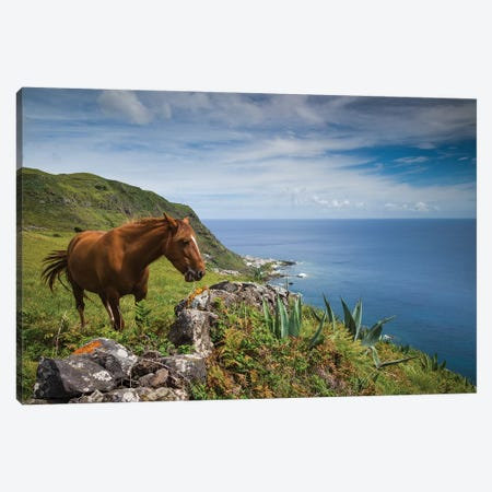 Portugal, Azores, Santa Maria Island, Maia. Horse in coastal pasture Canvas Print #WBI171} by Walter Bibikow Canvas Art
