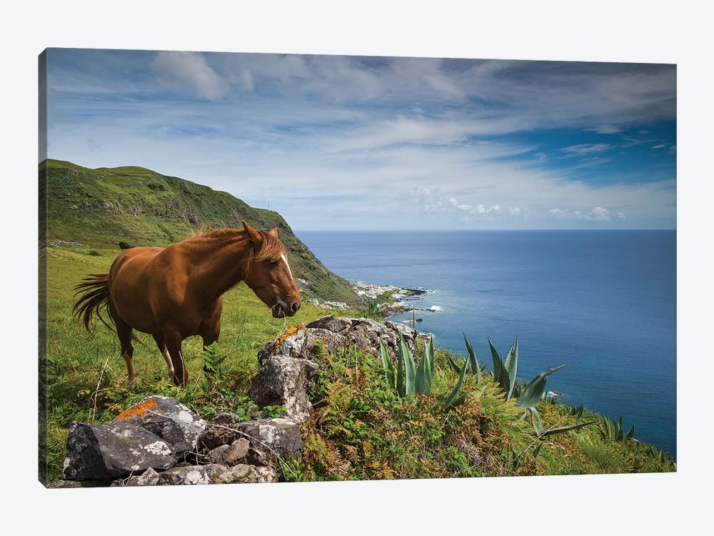 Portugal, Azores, Santa Maria Island, Maia. Horse in coastal pasture by Walter Bibikow 1-piece Canvas Wall Art