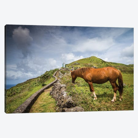 Portugal, Azores, Santa Maria Island, Maia. Horse in coastal pasture 3-Piece Canvas #WBI172} by Walter Bibikow Canvas Art