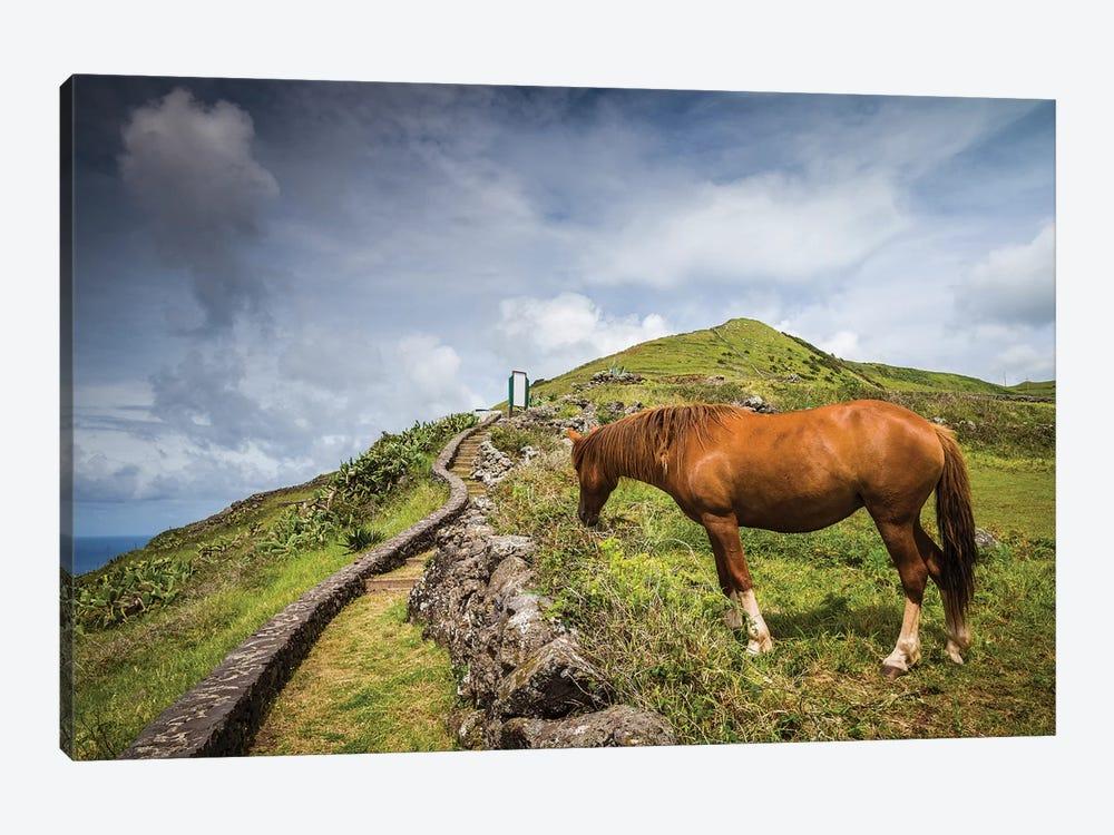 Portugal, Azores, Santa Maria Island, Maia. Horse in coastal pasture by Walter Bibikow 1-piece Canvas Print