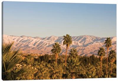 USA, California, Palm Springs. Palms and San Bernardino Mountains, sunrise. Canvas Art Print