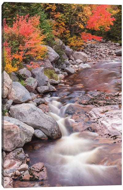 Canada, Nova Scotia, Cabot Trail. Neils Harbour, Cape Breton Highlands National Park, small stream in autumn. Canvas Art Print