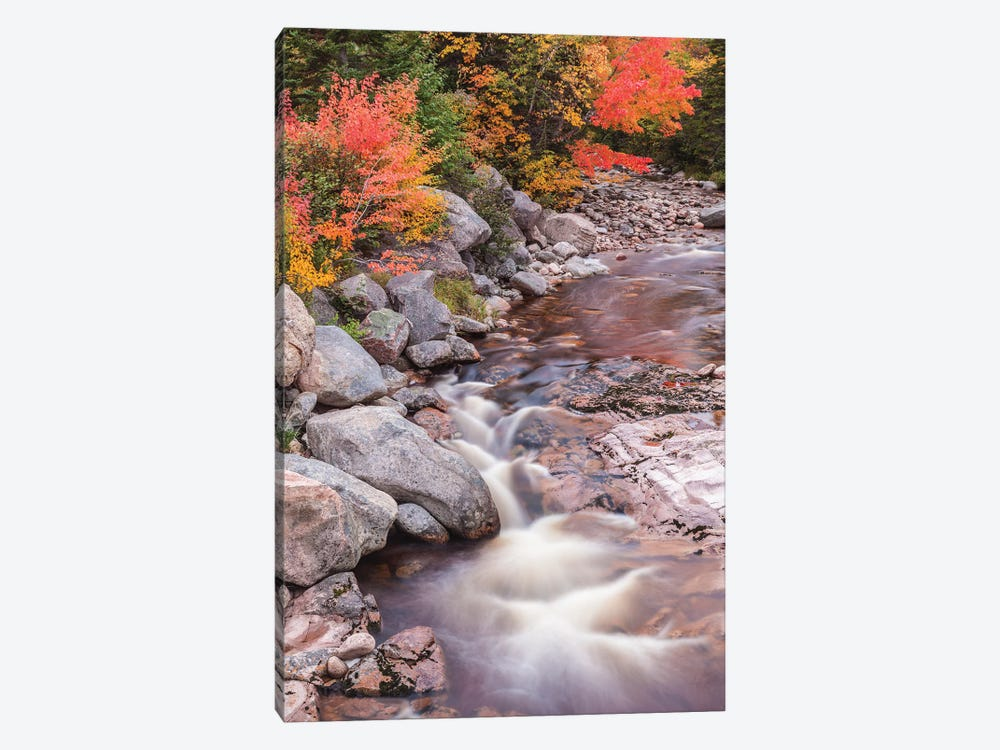 Canada, Nova Scotia, Cabot Trail. Neils Harbour, Cape Breton Highlands National Park, small stream in autumn. by Walter Bibikow 1-piece Canvas Print