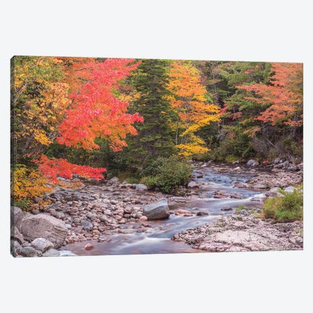 Canada, Nova Scotia, Cabot Trail. Neils Harbour, Cape Breton Highlands National Park, small stream in autumn. Canvas Print #WBI197} by Walter Bibikow Canvas Art Print