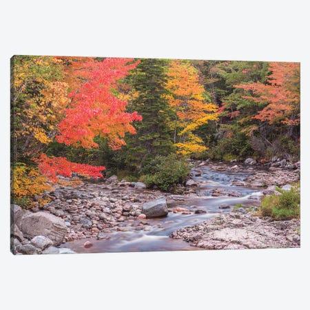 Canada, Nova Scotia, Cabot Trail. Neils Harbour, Cape Breton Highlands National Park, small stream in autumn. Canvas Print #WBI197} by Walter Bibikow Canvas Art Print