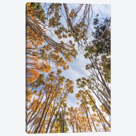 Canada, Nova Scotia, Walton. Trees in autumn. Canvas Print #WBI198} by Walter Bibikow Canvas Wall Art