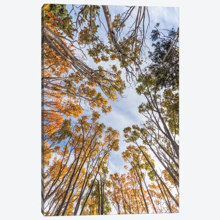 Canada, Nova Scotia, Walton. Trees in autumn. Canvas Print #WBI198} by Walter Bibikow Canvas Wall Art