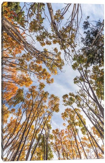 Canada, Nova Scotia, Walton. Trees in autumn. Canvas Art Print