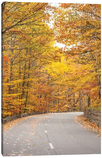 USA, Maine, Mt. Desert Island. Acadia National Park road. Canvas Art Print