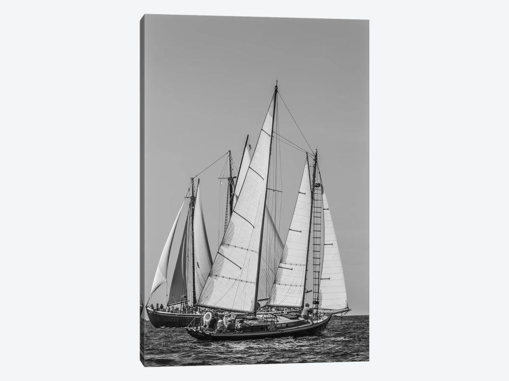 USA, Massachusetts, Cape Ann, Gloucester. Gloucester Schooner Festival, schooner parade of sail. by Walter Bibikow 1-piece Canvas Artwork