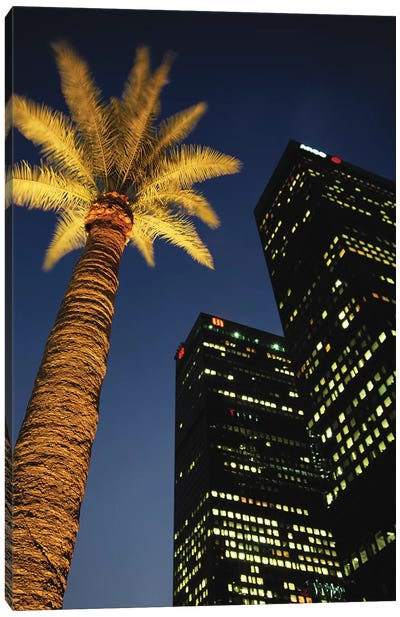 Low-Angle View Of An Illuminated Palm Tree, Los Angeles, California, USA Canvas Print #WBI40