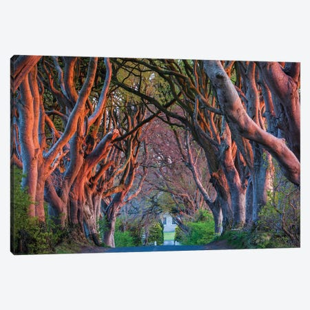 Ireland, County Antrim, Ballymoney, The Dark Hedges road Canvas Print #WBI88} by Walter Bibikow Canvas Print