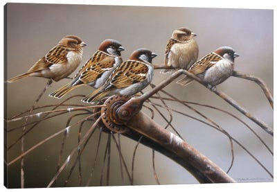 Birds On A Broken Bicycle Canvas Art Print