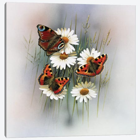 Butterflies Canvas Print #WEE13} by Jan Weenink Canvas Print