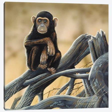 Chimpanzee Canvas Print #WEE15} by Jan Weenink Canvas Art