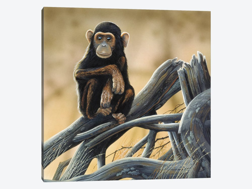 Chimpanzee by Jan Weenink 1-piece Canvas Artwork