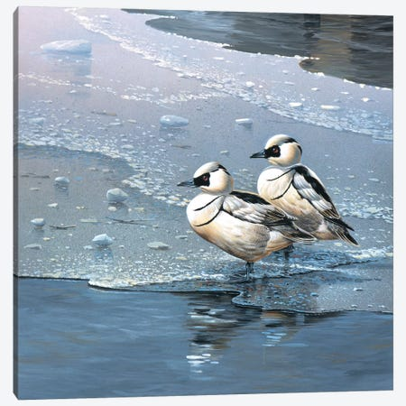 Ducks Canvas Print #WEE17} by Jan Weenink Canvas Wall Art
