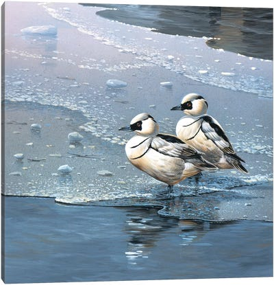 Ducks Canvas Art Print