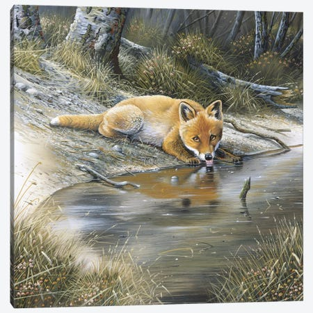 A Fox Drinking Water Canvas Print #WEE1} by Jan Weenink Canvas Print