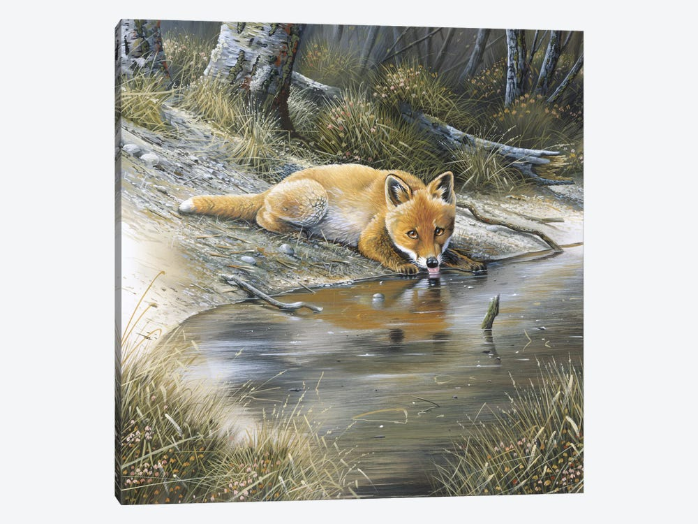 A Fox Drinking Water 1-piece Canvas Print