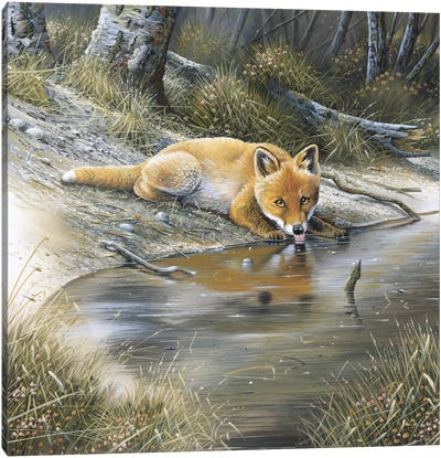 A Fox Drinking Water Canvas Art Print