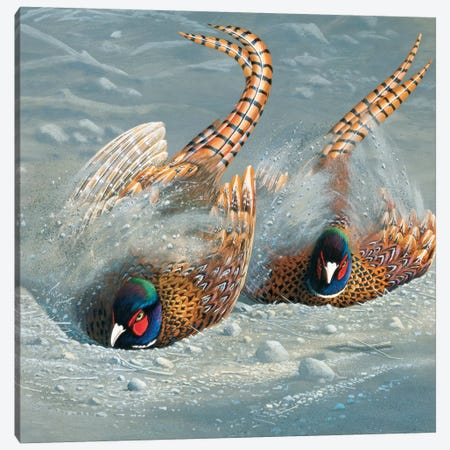 Gold Pheasant Canvas Print #WEE21} by Jan Weenink Canvas Artwork