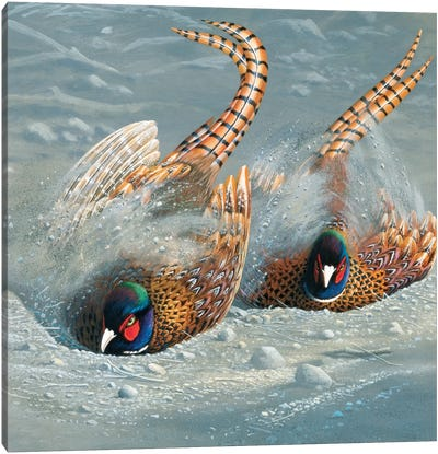 Gold Pheasant Canvas Art Print