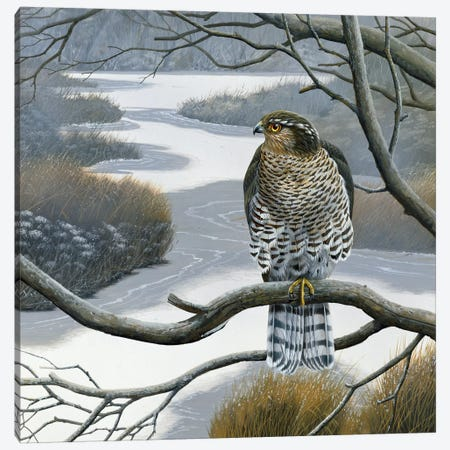 Hawk In A Tree Canvas Print #WEE22} by Jan Weenink Canvas Wall Art