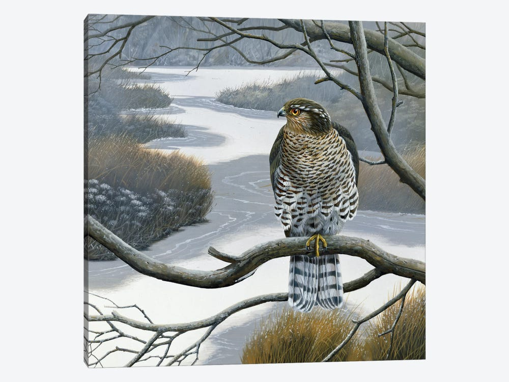 Hawk In A Tree by Jan Weenink 1-piece Canvas Art