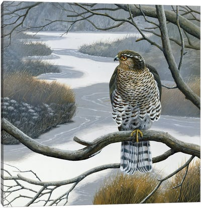 Hawk In A Tree Canvas Art Print